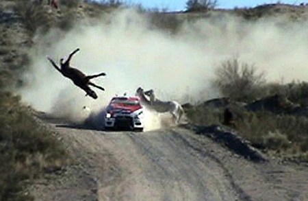 Image result for animal car crashes